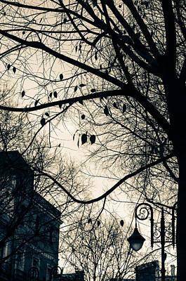 Photograph - As Shadows Fall by Andrea Mazzocchetti