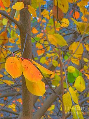 As The Leaves Prepare To Fall Art Print