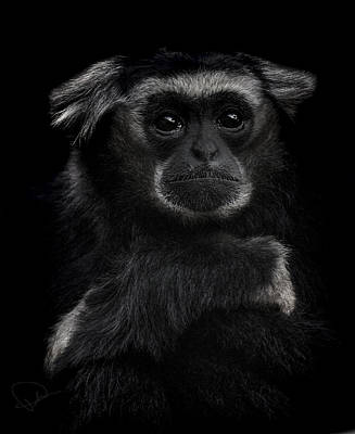 Monkey Photograph - As Time Goes By by Paul Neville