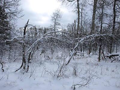 Photograph - As Winter Returns by DeeLon Merritt