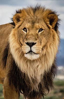 Photograph - Asante The Lion by Teresa Wilson