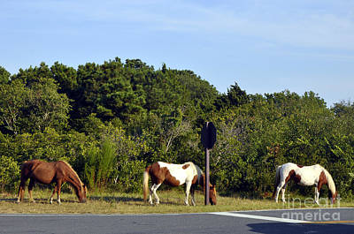 Photograph - Asateague Horses 1 by Andrew Dinh