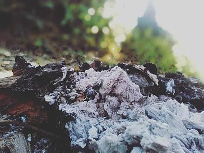 Moody Trees - Ash by Rahul Bhardwaj
