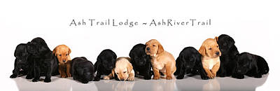 Ash Trail Lodge Pups Art Print by Pam Gabriel