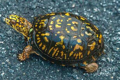 Photograph - Turtle by Buddy Morrison