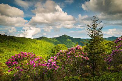 Flowers Photograph - Asheville Nc Blue Ridge Parkway Pinnacle by Dave Allen