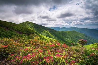 Asheville Wall Art - Photograph - Asheville Nc Blue Ridge Parkway Spring Flowers North Carolina by Dave Allen