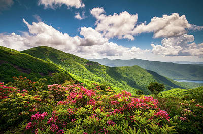 Photograph - Asheville Nc Blue Ridge Parkway Spring Flowers Scenic Landscape by Dave Allen