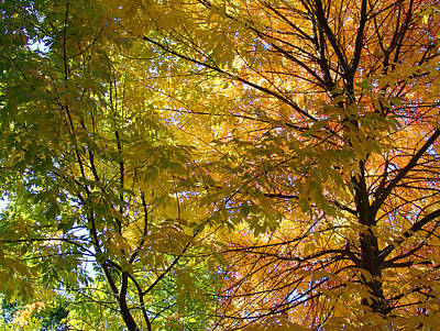 Photograph - Ashland Autumn by John Norman Stewart