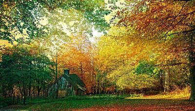 Ashridge Autumn Art Print by Anne Kotan