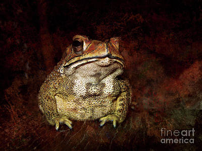 Photograph -  Asian Common Toad by Michelle Meenawong