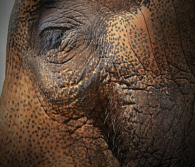 Photograph - Asian Elephant Abstract by Nadalyn Larsen