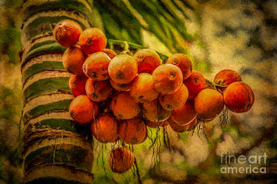 Photograph - Asian Fruit by Adrian Evans