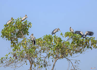 Photograph - Asian Openbill Storks Dthn0205 by Gerry Gantt