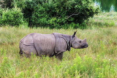 Photograph - Asian Rhinoceros by Tom Mc Nemar