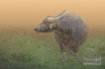 Photograph - Asian Water Buffalo by Michelle Meenawong