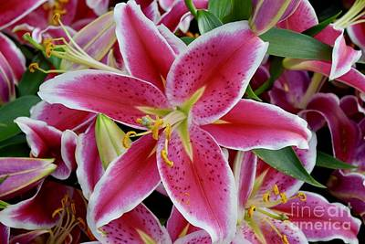 Photograph - Asiatic Lilies After Eight by Jeannie Rhode