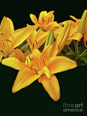 Photograph - Asiatic Lily by Steven Parker