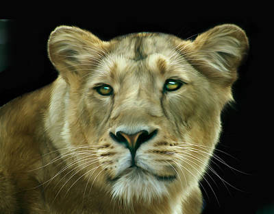 Felines Digital Art - Asiatic Lioness by Julie L Hoddinott