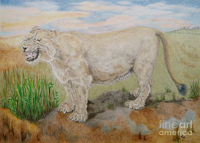 Drawing - Asiatic Lioness by Yvonne Johnstone