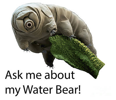 Macrobiotus Sapiens Photograph - Ask Me About My Water Bear by Eye of Science