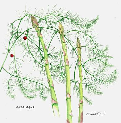 Painting - Asparagus - Asparagus Officinalis by Michael Earney