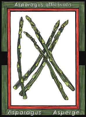 Asparagus Drawing - Asparagus Asperge by Baya Clare