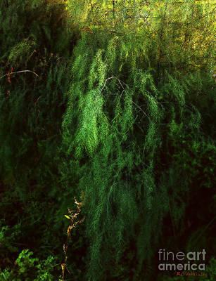 Asparagus Digital Art - Asparagus Jungle by RC deWinter