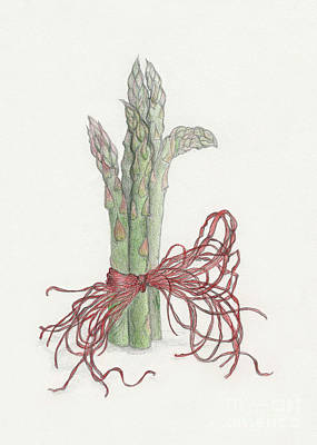 Asparagus Drawing - Asparagus by Tara Poole