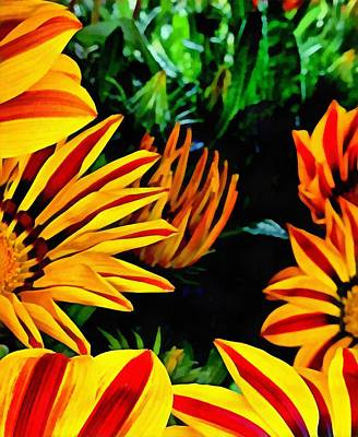 Photograph - Aspects Of Gazania by Dorothy Berry-Lound