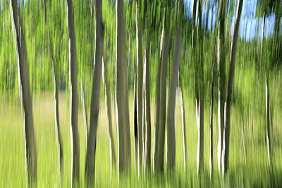 Photograph - Aspen Abstract 2 by Donna Kennedy