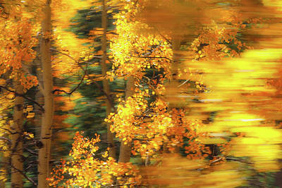 Photograph - Aspen Abstract by Steven Bateson