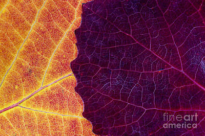 Vivid Fall Colors Photograph - Aspen Abstract by Tim Gainey