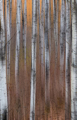 Photograph - Aspen Abstract Vertical by Patti Deters