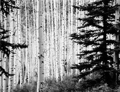 Aspen Afternoon Print by Allan McConnell