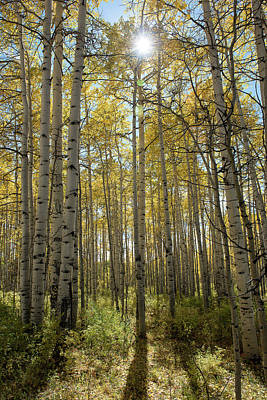 Photograph - Aspen Afternoon by Bud Simpson