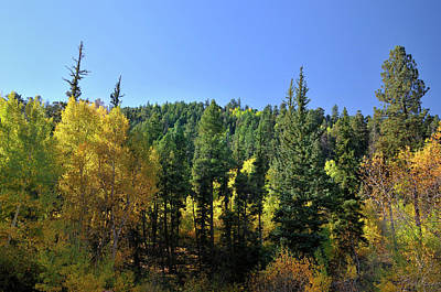 Photograph - Aspen And Cottonwood In Concert by Ron Cline