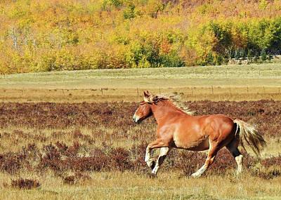 Aspen And Horsepower Art Print