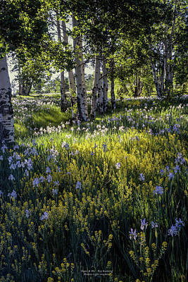 Photograph - Aspen And Iris by Roy Kastning