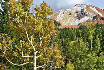 Photograph - Aspen And Red Mountain by Ray Mathis