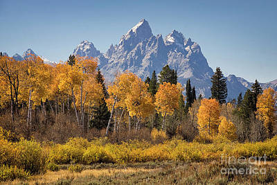 Photograph - Aspen And The Grand Teton by Priscilla Burgers