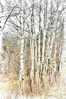 Photograph - Aspen by Ann Powell