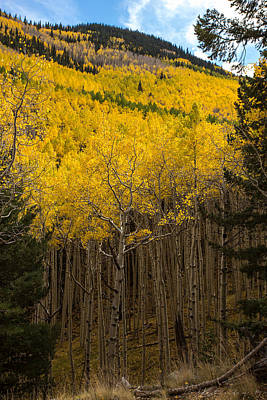 Flagstaff Wall Art - Photograph - Aspen Audience by Bill Cantey