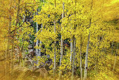 Photograph - Aspen Autumn Burst by Bill Gallagher