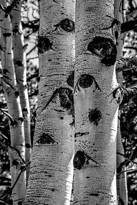 Photograph - Aspen Bark by Michael Brungardt