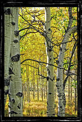 Photograph - Aspen Bark by Mike Braun
