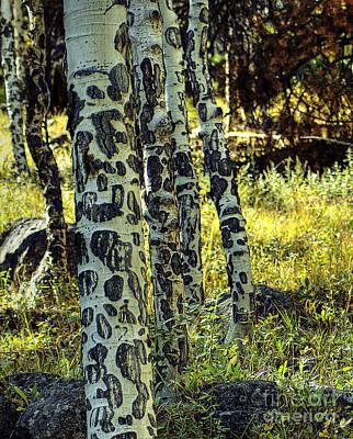Photograph - Aspen Bark by Pete Hellmann