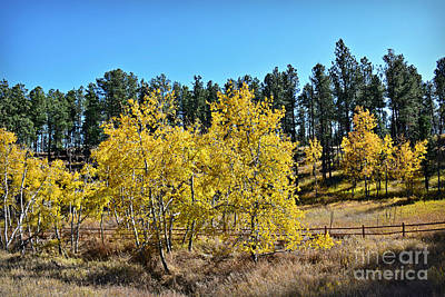 Photograph - Aspen Beauty by Kathy M Krause