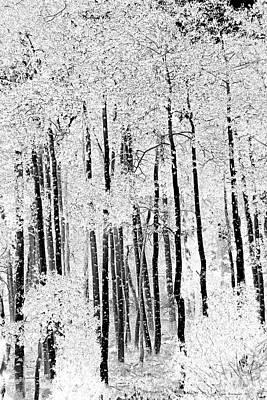 Photograph - Aspen Black And White by John Stephens