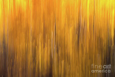 Photograph - Aspen Blur #5 by Vincent Bonafede